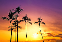 Gorgeous golden Hawaiian sunset with silhouetted  palm trees off Magic Island on the island of Oahu.