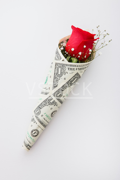 Studio shot of single red rose wrapped in one dollar banknote on white background