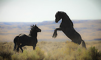 Wild Afternoon - Wild Horses - Wyoming