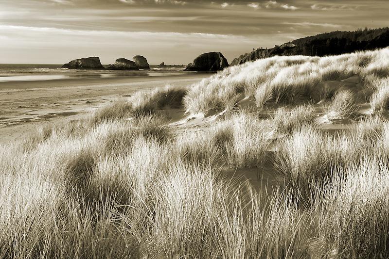 Dune grass and volcanic sea stacks. Cannon Beach. Oregon