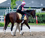 June 7, 2019 : War of Will leaves the track after jogging as horses prepare for the Belmont Stakes on Belmont Stakes Festival Weekend at Belmont Park in Elmont, New York. Scott Serio/Eclipse Sportswire/CSM