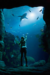 USA, Tennessee, Chattanooga, Girl (8-9) looking at shark in aquarium