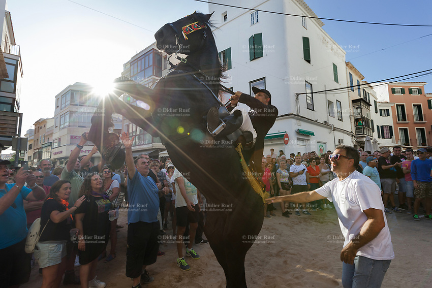 """Spain. Balearic Islands. Minorca (Menorca). Mahon. Rising horse at  """"Festes de la Mare de Déu de Gràcia"""" during the traditional summer festival. The Menorquín is a breed of horse indigenous to the island and is closely associated with the doma menorquina style of riding. The riders wear black and white and most of their horses (adorned with ribbons and multi-coloured rosettes) are of the highly-considered Menorcan breed. The riders and their horses parade through the streets, and these magnificent and remarkably calm horses rear up on their hind-legs to the delight of the crowd. The most valued quality of Menorquín horse is its suitability for the traditional festivals of Menorca. Horses and riders are at the centre of local fiesta celebrations, in a tradition that may go back to the 14th century and incorporate elements of Christian, pagan and Moorish ritual. Some 150 riders participate in the festival in Mahón. Riders pass through the crowds, executing caracoles and repeatedly performing the bot. The aim of the 'bot' is for the horse to stand on its hind legs while keeping its head and shoulders relaxed and without tension; the more often it is performed and the greater the distance travelled, the greater the applause of the crowd. The elevade, in which the horse beats the air with the front hooves, is also a part of the ritual of the fiesta. Touching the horses is believed to bring good luck. Maó (in Catalan) and Mahón (in Spanish), written in English as Mahon, is a municipality, the capital city of the island of Menorca, and seat of the Island Council of Menorca. The city is located on the eastern coast of the island, which is part of the autonomous community of the Balearic. In Spain, an autonomous community is a first-level political and administrative division, created in accordance with the Spanish constitution of 1978, with the aim of guaranteeing limited autonomy of the nationalities and regions that make up Spain. 7.09.2019 © 2019 Didier Ruef"""