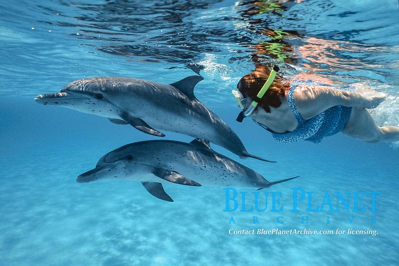 Atlantic Spotted dolphin, Stenella frontalis, Caribbean, Bahamas, Little Bahama Bank, Wild Atlantic Spotted Dolphin with freediver, Bahamas, Mammal