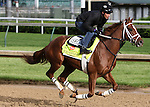 LOUISVILLE, KY - MAY 5: Oscar Nominated, trained by Michael J. Maker and owned by Ramsey, Kenneth L. and Sarah K., exercises and prepares during morning workouts for the Kentucky Derby and Kentucky Oaks at Churchill Downs on May 6, 2016 in Louisville, Kentucky.(Photo by Joan Fairman Kanes/Eclipse Sportswire/Getty Images)