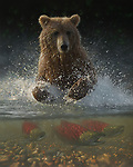 """NOTE FOR ONLINE:  MAXIMUM OF 10 IMAGES TO RUN ALONGSIDE THIS STORY - UNLESS OTHERWISE AGREED WITH A REVISED FEE IN PLACE.<br /> <br /> Pictured:  One of Collin Bogle's realistic paintings: Lucky Hole<br /> <br /> These intricately detailed pictures of wild animals look like photographs - but are in fact paintings.  American artist Collin Bogle's extraordinary work portrays close up encounters with animals such as lions, snow leopards, wolves, eagles and bears.<br /> <br /> He uses photos of the animals as a reference and spends between two weeks and two months painstakingly creating each piece.  Mr Bogle, who works out of his home in Seattle, Washington, in the United States, said: """"My dad is an artist and was also a high school art teacher - so I started learning to paint as soon as I could hold a brush.  SEE OUR COPY FOR DETAILS.<br /> <br /> Please byline: Collin Bogle/Solent News<br /> <br /> © Collin Bogle/Solent News & Photo Agency<br /> UK +44 (0) 2380 458800"""