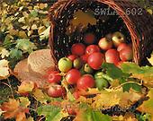 Carl, STILL LIFES, photos(SWLA602,#I#) Stilleben, naturaleza muerta
