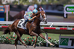 AUG 24,2014:Conquest Panthera,ridden by Mike Smith,wins the maiden race,1R at Del Mar in Del Mar,CA. Kazushi Ishida/ESW/CSM