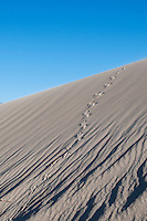 Raven tracks on the sand dunes in Saline Valley, Death Valley National Park, California