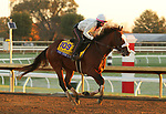 Tiz The Law, trained by trainer Barclay Tagg, exercises in preparation for the Breeders' Cup Classic at Keeneland Racetrack in Lexington, Kentucky on October 31, 2020.