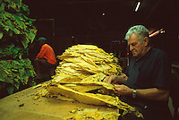 Sorting and Storing Tobacco Leaf, Nino Rizzetto (front) and Lui Falcomer, Schincariol's Farm, Dimbulah, 2003.