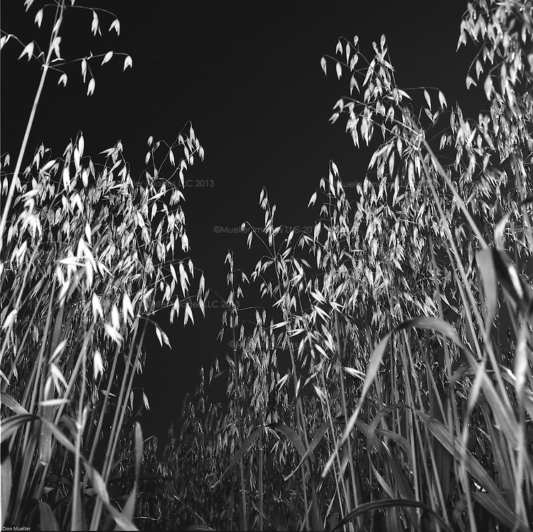 Images of a wheat farm from 1958. Subjects are unknown.