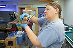 Veterinarian Kelly Saltman Examining Olive Ridley Sea Turtle, Welfleet Bay Wildlife Sanctuary, Audubon