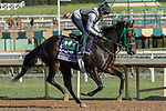 ARCADIA, CA  OCTOBER 30: Breeders' Cup Juvenile Turf Sprint entrant Another Miracle, trained by Gary Contessa, exercises in preparation for the Breeders' Cup World Championships at Santa Anita Park in Arcadia, California on October 30, 2019. (Photo by Casey Phillips/Eclipse Sportswire/CSM)