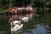 Swan boats with swans Boston Public Gardens