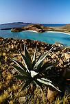 Century Plant, Baja California, Sea of Cortez, Mexico