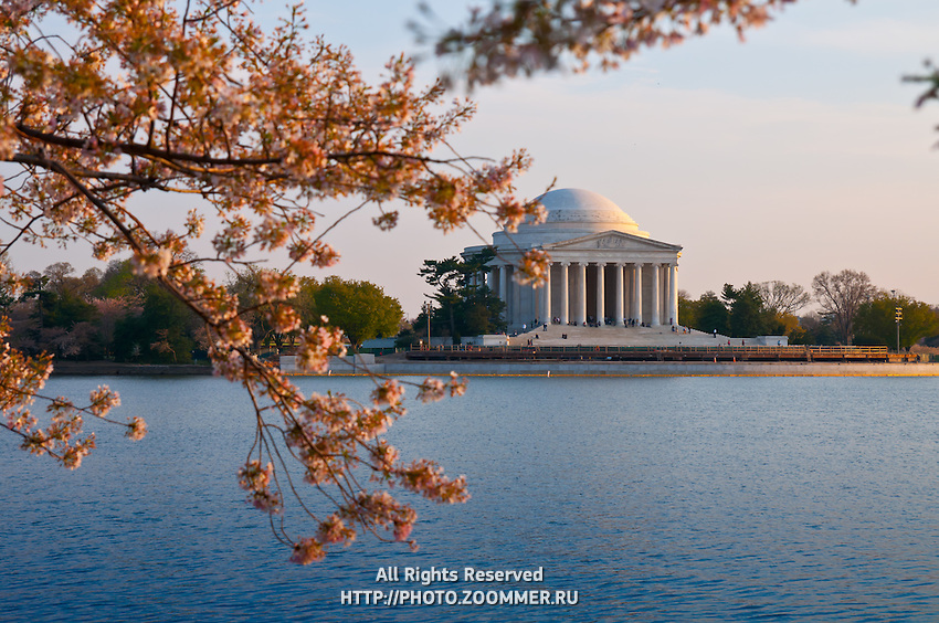 Jefferson Memorial In Washington DC with cherry blossom tree