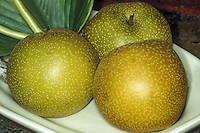 Asian pears 'Hosui' fruit Pyrus, harvested, picked, golden and speckled on plate