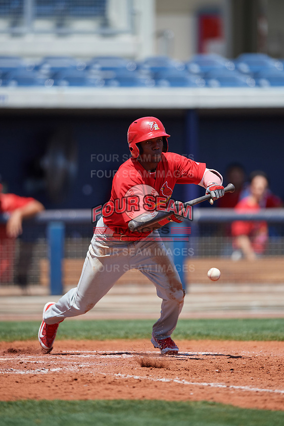Palm Beach Cardinals left fielder Randy Arozarena (22) lays down a bunt during a game against the Charlotte Stone Crabs on April 12, 2017 at Charlotte Sports Park in Port Charlotte, Florida.  Palm Beach defeated Charlotte 8-7.  (Mike Janes/Four Seam Images)