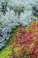 Moss, Mt desert Island, Maine