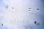 Unidentified Tracks