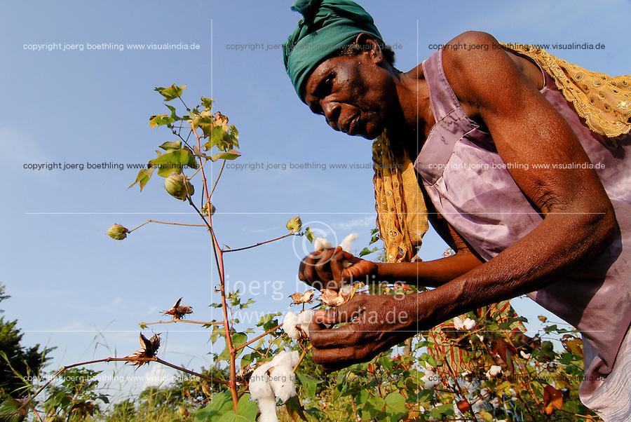 MALI , Bougouni, Fair trade und Biobaumwolle Projekt , Frauen bei Waumwollernte   .MALI , Bougouni , women harvest fair trade organic cotton