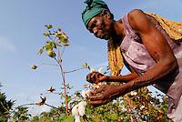 MALI , Bougouni, Fair trade und Biobaumwolle Projekt , Frauen bei Waumwollernte | .MALI , Bougouni , women harvest fair trade organic cotton