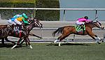 November 2, 2019: Belvoir Bay, ridden by Javier Castellano, wins the Breeders' Cup Turf Sprint on Breeders' Cup World Championship Saturday at Santa Anita Park on November 2, 2019: in Arcadia, California. Sam Navarro/Eclipse Sportswire/CSM