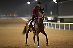 DUBAI,UNITED ARAB EMIRATES-MARCH 23: Awardee,trained by Mikio Matsunaga,exercises in preparation for the  Dubai World Cup at Meydan Racecourse on March 23,2017 in Dubai,United Arab Emirates (Photo by Kaz Ishida/Eclipse Sportswire/Getty Images)