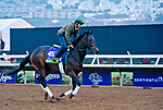 DEL MAR, CA - OCTOBER 28: Ballagh Rocks, owned by Donegal Racing and trained by William I. Mott, exercises in preparation for Breeders' Cup Mile at Del Mar Thoroughbred Club on October 28, 2017 in Del Mar, California. (Photo by Scott Serio/Eclipse Sportswire/Breeders Cup)
