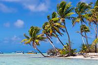Motu Tereia Blue Lagoon with idyllic coconut palm tree, beach, and colorful boats, in Rangiroa atoll, Tuamotus French Polynesia, South Pacific Ocean
