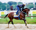 October 2, 2020: Excession exercises as horses prepare for the Preakness Stakes at Pimlico Race Course in Baltimore, Maryland. Scott Serio/Eclipse Sportswire/CSM