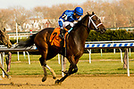 OZONE PARK, NEW YORK - DEC 2: Indulgent, #7, ridden by Luis Saez, wins the Go for Wand Handicap, at Aqueduct Racetrack, on December2, 2017 in Ozone Park, New York. ( Photo by Sue Kawczynski/Eclipse Sportswire/Getty Images)