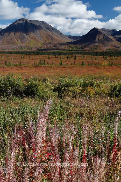 Autumn tundra before snow