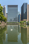 Swans paddling in the moat surrounding the Tokyo Imperial Palace in Japan. It is the primary residence of the Emperor of Japan.