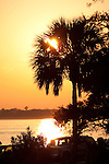 Charleston South Carolina Lowcountry Sunset on the Battery Sunset Palmetto Palm tree