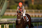 September 27 2014: Conquest Eclipse with  Corey Nakatani up before the Chandelier Stakes at Santa Anita Park in Arcadia CA. Alex Evers/ESW/CSM