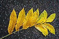 Yellow leaf on asphalt