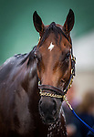 April 30, 2014: Hoppertunity gets a bath at Churchill Downs in Louisville Ky. Alex Evers/ESW/CSM