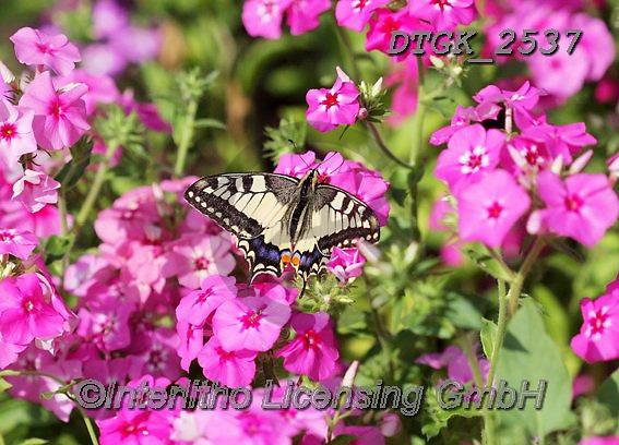 Gisela, FLOWERS, BLUMEN, FLORES, photos+++++,DTGK2537,#f#, EVERYDAY