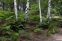 Riserva naturale regionale Tor Caldara.<br /> <br /> La riserva naturale regionale Tor Caldara è un'area naturale protetta situata nel comune di Anzio e istituita nel 1988 <br /> All'interno il territorio è caratterizzato da numerose piccole sorgenti sulfuree.
