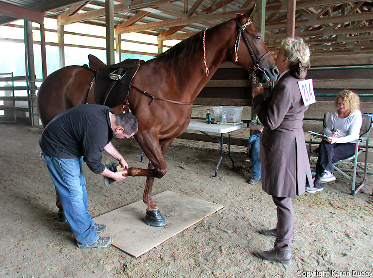 """Nathan Slaven (right) of Independence, Ore., inspects, Tee Time, a Tennessee Walking Horse under the watchful gaze of the horse's owner Sue Williams of McCleary, Wash., at the Northwest Walking Horse Classic in Spanaway, Wash., on July 11, 2015. Slaven is a """"designated qualified person (DQP) certified by the USDA to check for soring, an illegal practice that involves burning a horses skin with chemicals. The horse passed his inspection. (© Karen Ducey Photography)"""