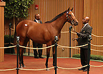 Hip #349 Tiznow - Storminthegarden filly was the second highest priced yearling during the 2nd session of the Keeneland September Yearling Sale when she sold for $500,000.   Consigned by Sweezey and Partners.  September 11, 2012.