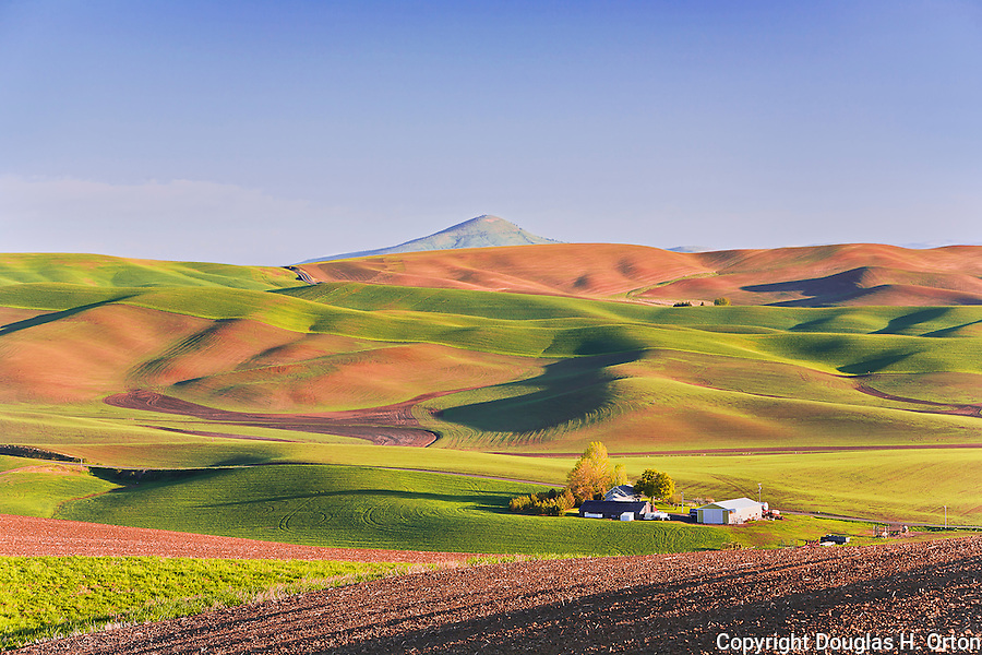 Early morning in the Palouse Hills, Washington, known as the heart of wheat farming in the United States is also famous for its rolling scenery.  This landscape is from Kamiak Butte, a Whitman County Park offering camping, picknicking, hiking, and incredible views of both Idaho and Washington Palouse country.  Steptoe Butte, a Washington State Park, is in the background.