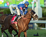 HALLANDALE BEACH, FL - December 30: Durocher #1 with Paco Lopez in the irons wins the $75,000 Tropical Park Derby Stakes for trainer Joseph F. Russo at Gulfstream Park on December 30, 2017 in Hallandale Beach, FL. (Photo by Bob Aaron/Eclipse Sportswire/Getty Images)