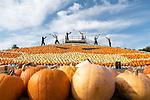 5,000 pumpkins used for spectacular coronavirus artwork