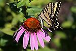 Misc. garden shots in Gardnerville, Nev., on Friday, July 7, 2017. <br /> Photo by Cathleen Allison/Nevada Photo Source