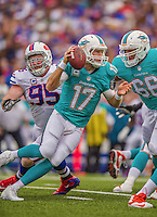 14 September 2014: Miami Dolphins quarterback Ryan Tannehill scrambles as he looks downfield during play against the Buffalo Bills at Ralph Wilson Stadium in Orchard Park, NY. The Bills defeated the Dolphins 29-10 to win their home opener and start the season with a 2-0 record. Mandatory Credit: Ed Wolfstein Photo *** RAW (NEF) Image File Available ***