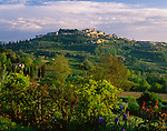 Tuscany, ITlay:  Morning sun on a spring gardenand valley with the hill town of Montepulciano on the distant hill top - Val d'Orcia area
