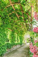 France, Loiret (45), Chilleurs-aux-Bois, château de Chamerolles et jardins de style renaissance, longue et haute pergola couverte de rosiers grimpants, rosiers lianes, glycines, vignes